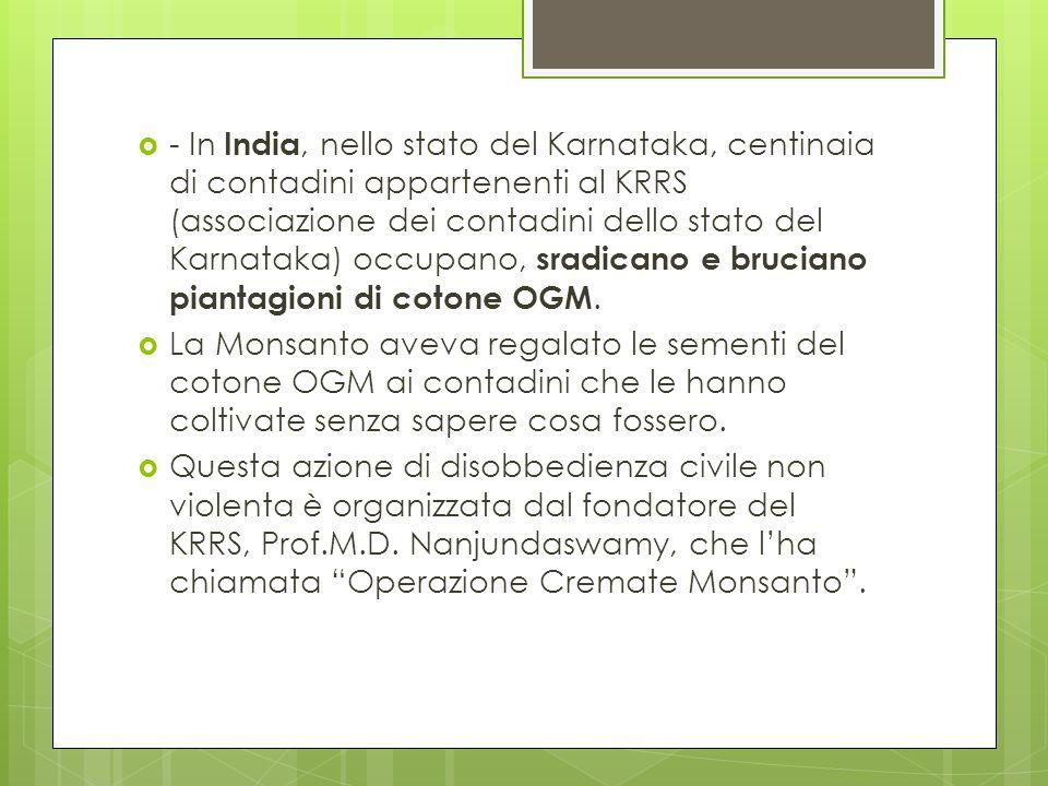 - In India, nello stato del Karnataka, centinaia di contadini appartenenti al KRRS (associazione dei contadini dello stato del Karnataka) occupano, sradicano e bruciano piantagioni di cotone OGM.