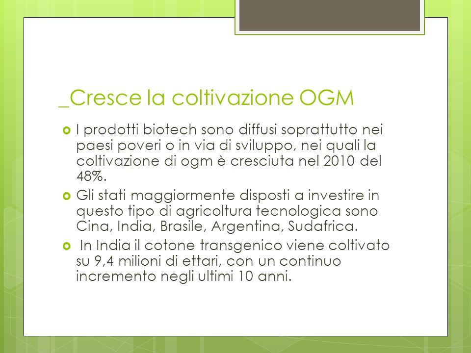 _Cresce la coltivazione OGM