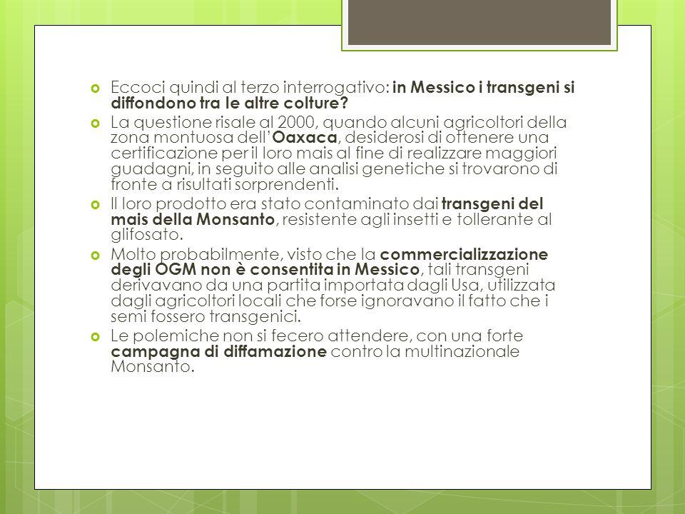 Eccoci quindi al terzo interrogativo: in Messico i transgeni si diffondono tra le altre colture