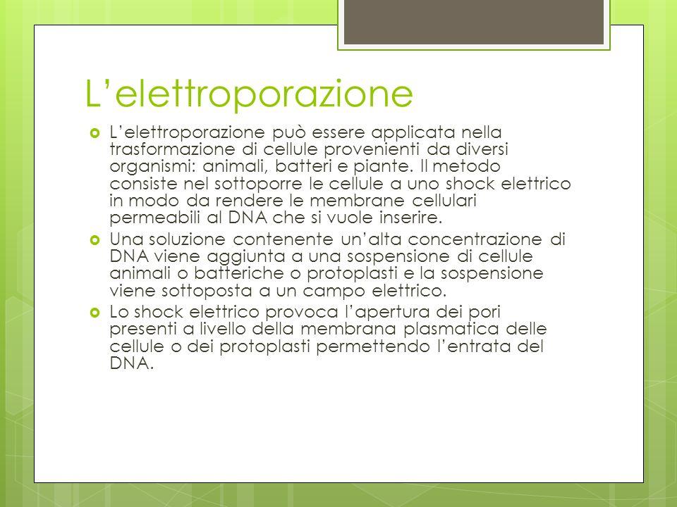 L'elettroporazione