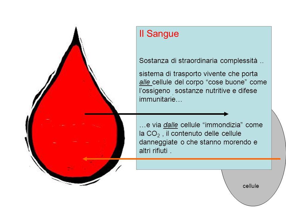 Il Sangue Sostanza di straordinaria complessità ..