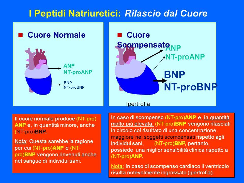 BNP NT-proBNP I Peptidi Natriuretici: Rilascio dal Cuore ANP NT-proANP