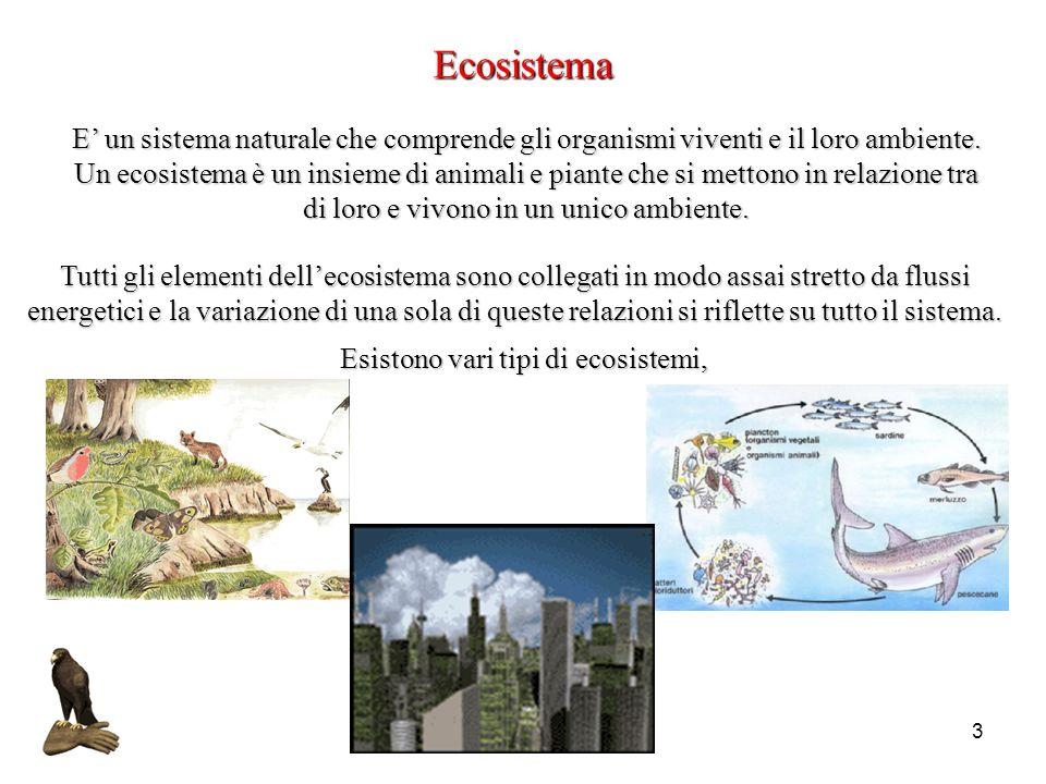 Esistono vari tipi di ecosistemi,
