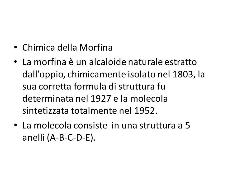 Chimica della Morfina