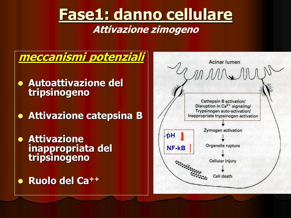 Fase1: danno cellulare Attivazione zimogeno