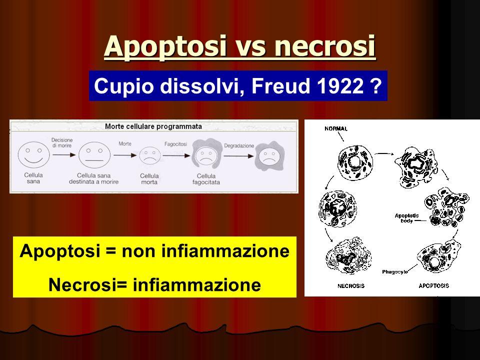 Apoptosi = non infiammazione Necrosi= infiammazione