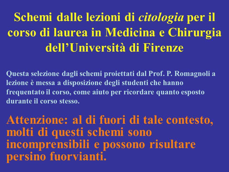 Schemi dalle lezioni di citologia per il corso di laurea in Medicina e Chirurgia dell'Università di Firenze