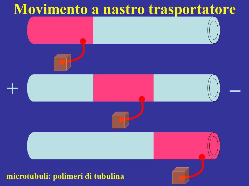 Movimento a nastro trasportatore