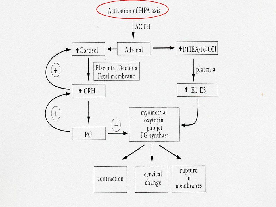 Stress materni e fetali (ipossia, infezioni)