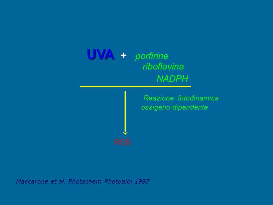 UVA + porfirine riboflavina NADPH ROS Reazione fotodinamica