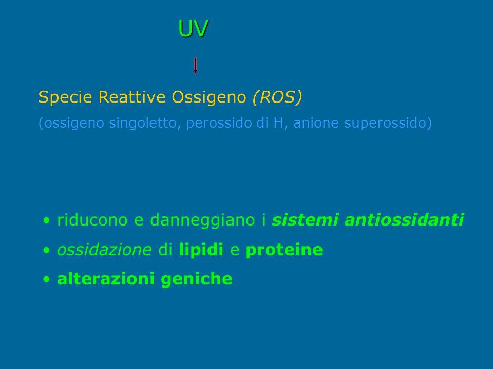 UV Specie Reattive Ossigeno (ROS)