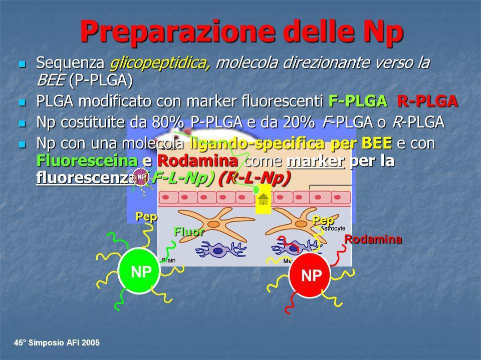 Preparazione delle Np Sequenza glicopeptidica, molecola direzionante verso la BEE (P-PLGA) PLGA modificato con marker fluorescenti F-PLGA R-PLGA.