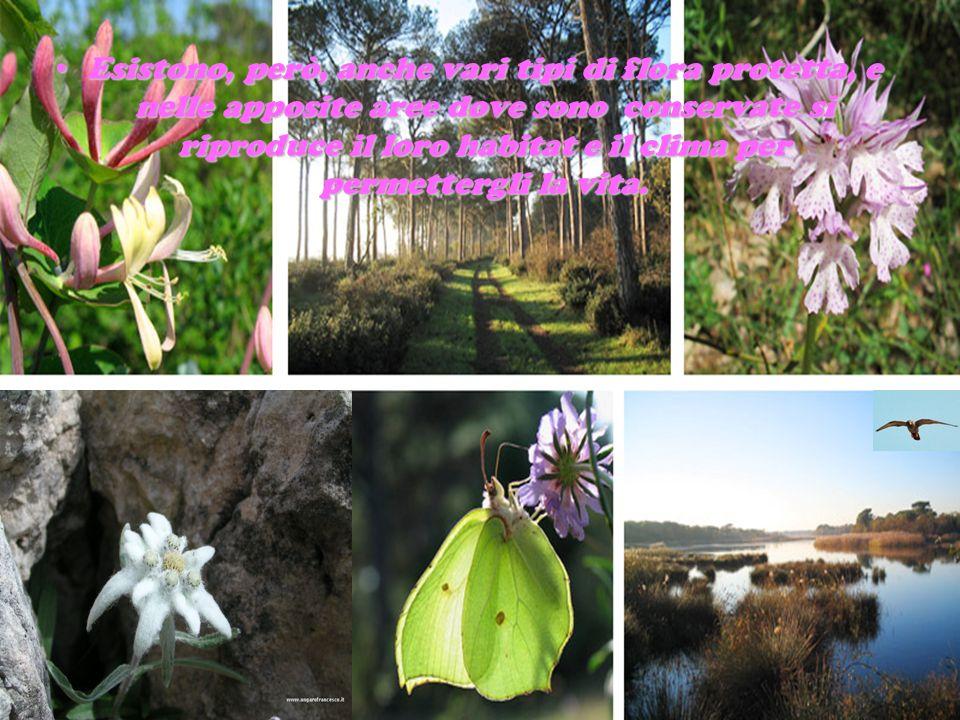 Esistono, però, anche vari tipi di flora protetta, e nelle apposite aree dove sono conservate si riproduce il loro habitat e il clima per permettergli la vita.