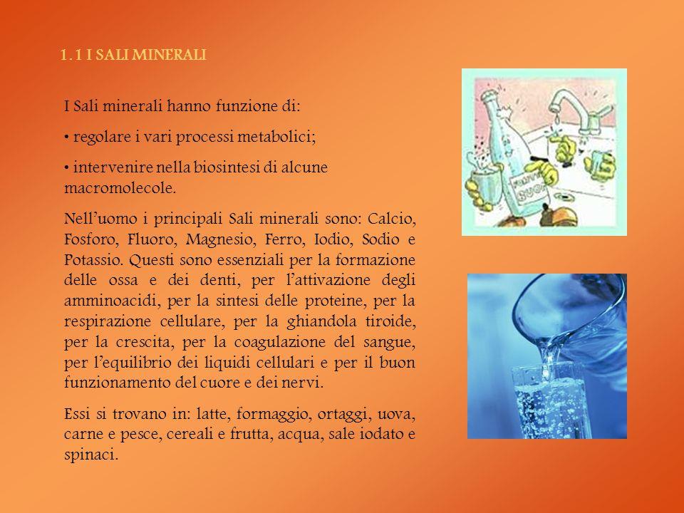 1.1 I SALI MINERALI I Sali minerali hanno funzione di: regolare i vari processi metabolici; intervenire nella biosintesi di alcune macromolecole.
