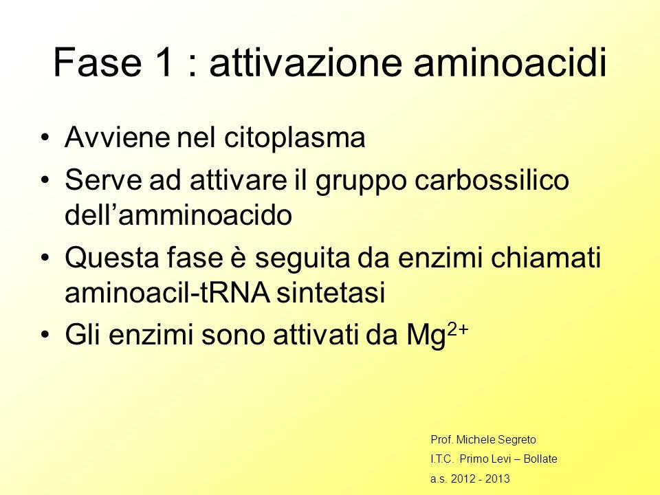 Fase 1 : attivazione aminoacidi