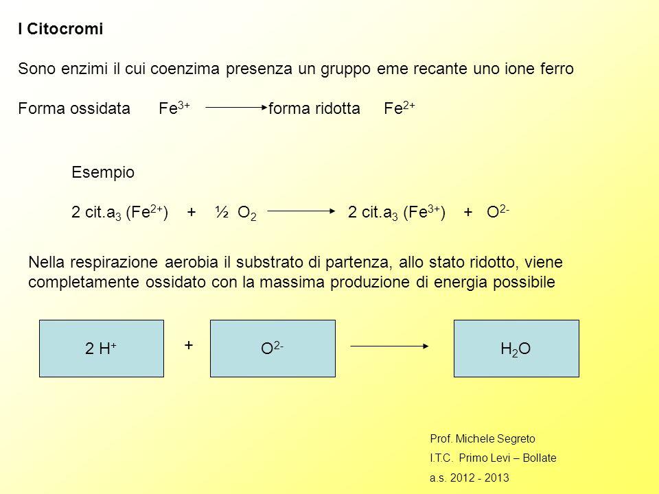 Forma ossidata Fe3+ forma ridotta Fe2+