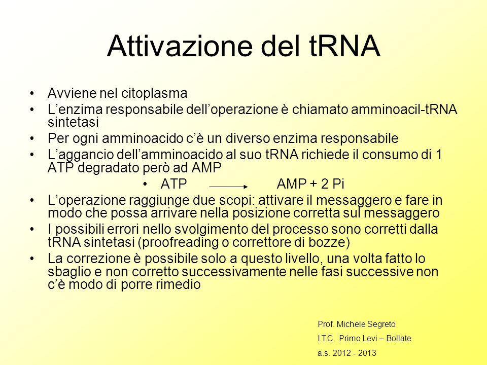Attivazione del tRNA Avviene nel citoplasma