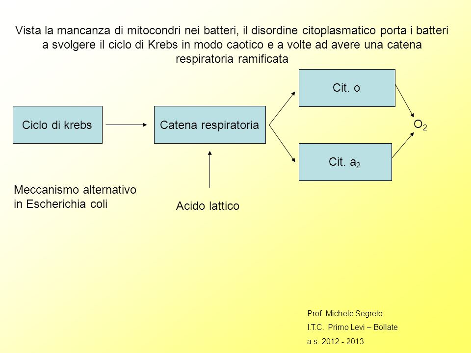 Meccanismo alternativo in Escherichia coli Acido lattico