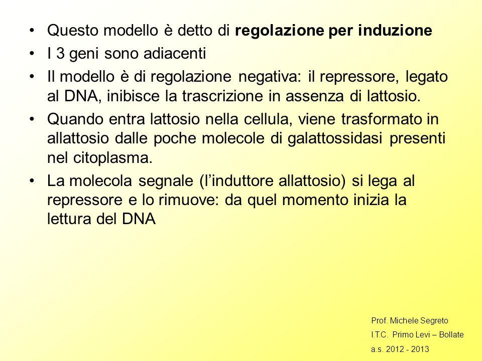 Questo modello è detto di regolazione per induzione