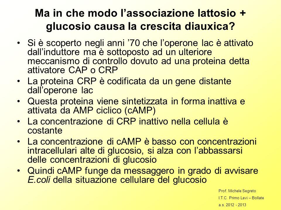 Ma in che modo l'associazione lattosio + glucosio causa la crescita diauxica