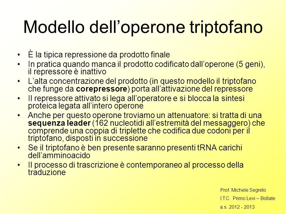 Modello dell'operone triptofano