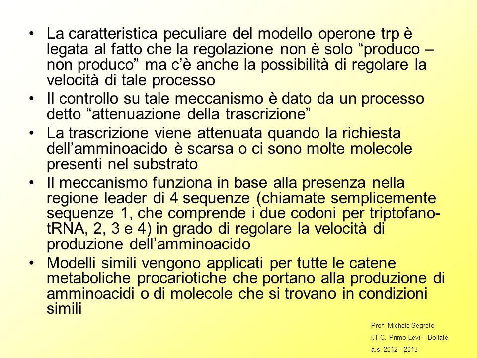 La caratteristica peculiare del modello operone trp è legata al fatto che la regolazione non è solo produco – non produco ma c'è anche la possibilità di regolare la velocità di tale processo
