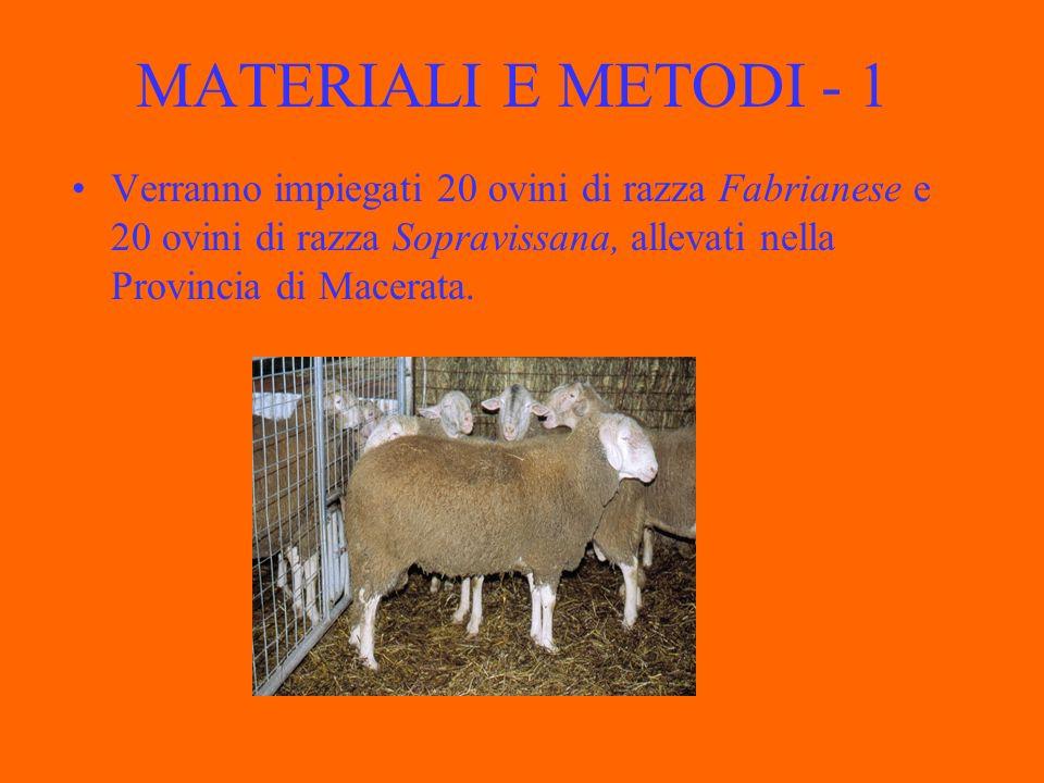 MATERIALI E METODI - 1 Verranno impiegati 20 ovini di razza Fabrianese e 20 ovini di razza Sopravissana, allevati nella Provincia di Macerata.