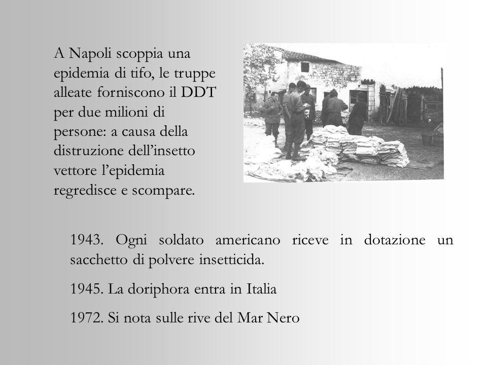 A Napoli scoppia una epidemia di tifo, le truppe alleate forniscono il DDT per due milioni di persone: a causa della distruzione dell'insetto vettore l'epidemia regredisce e scompare.