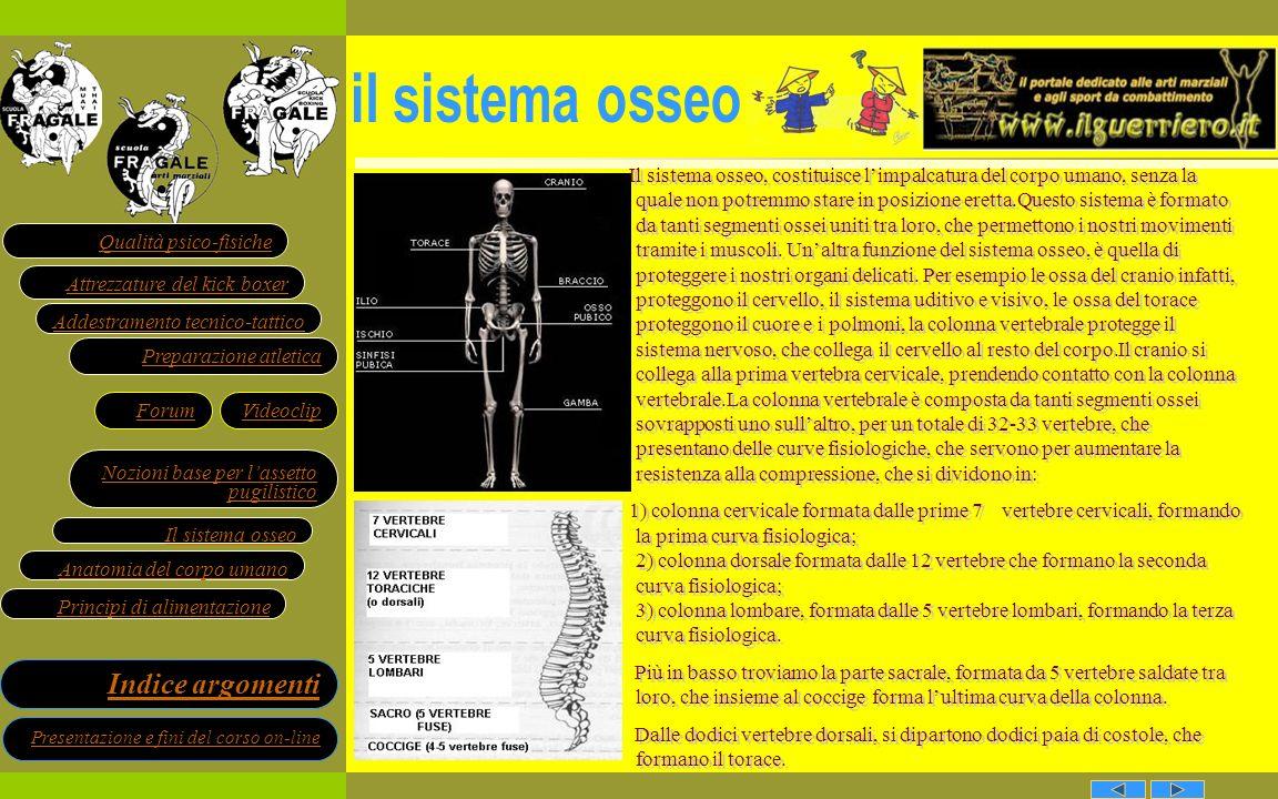 il sistema osseo