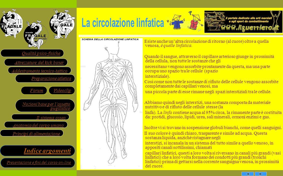 La circolazione linfatica