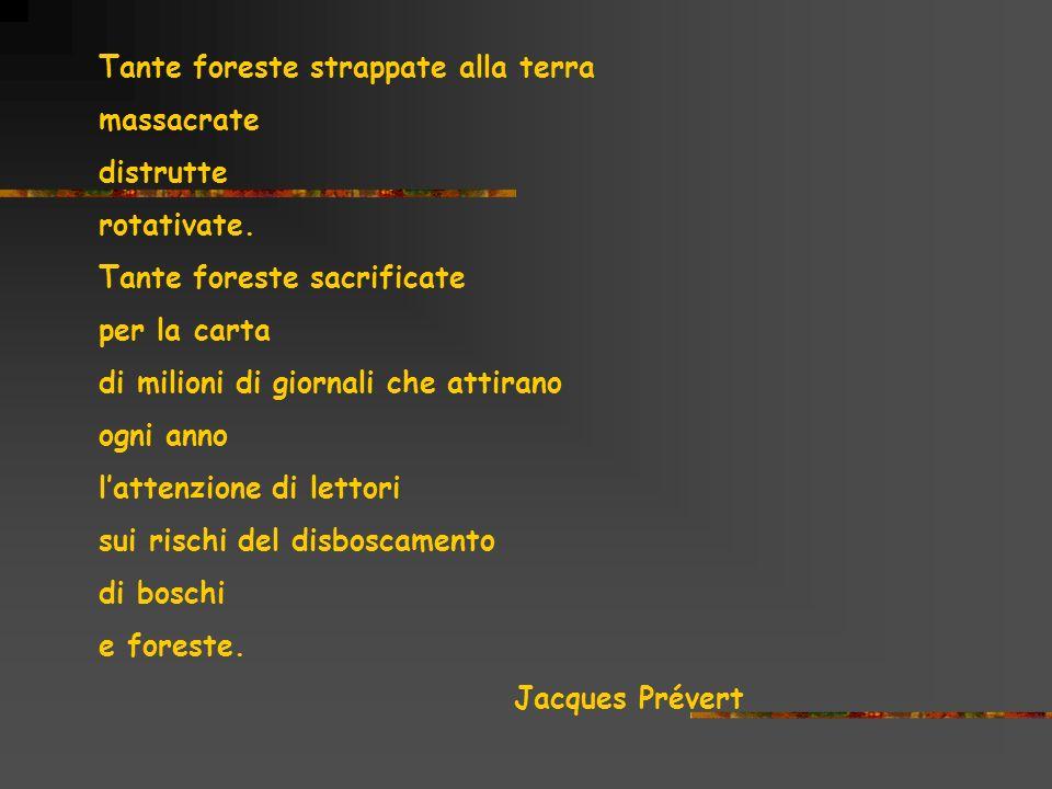 Tante foreste strappate alla terra