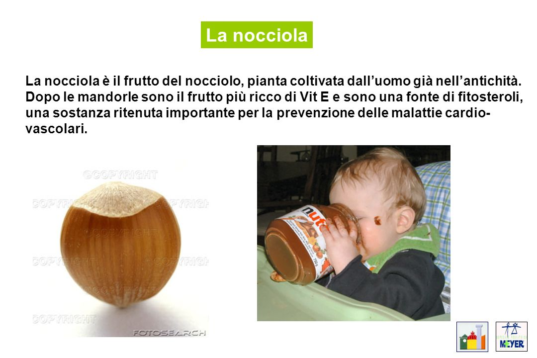 La nocciola La nocciola è il frutto del nocciolo, pianta coltivata dall'uomo già nell'antichità.