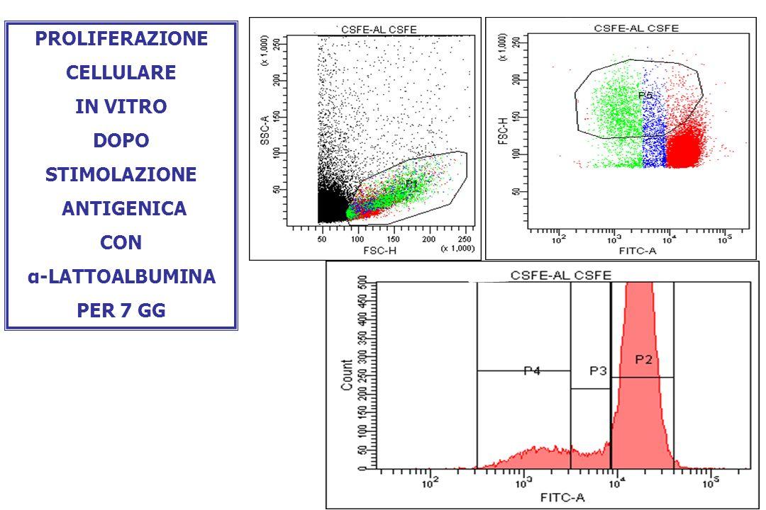 PROLIFERAZIONE CELLULARE IN VITRO DOPO STIMOLAZIONE ANTIGENICA CON α-LATTOALBUMINA PER 7 GG