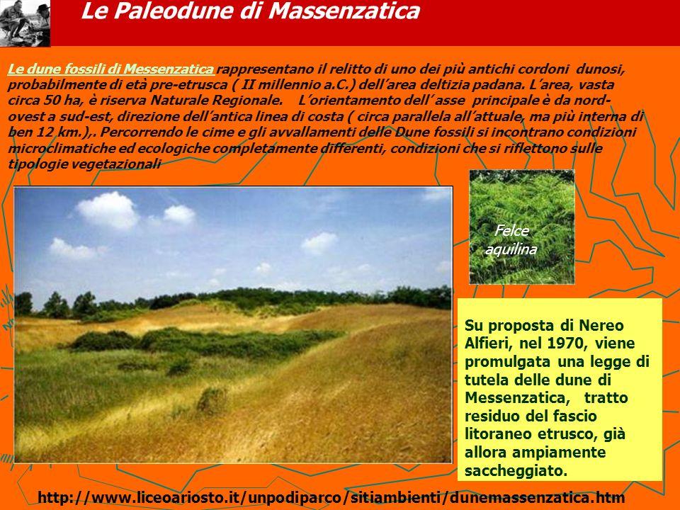 Le Paleodune di Massenzatica