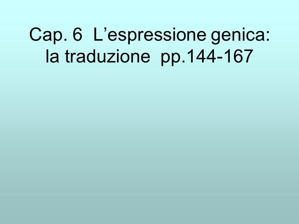 Cap. 6 L'espressione genica: la traduzione pp.144-167
