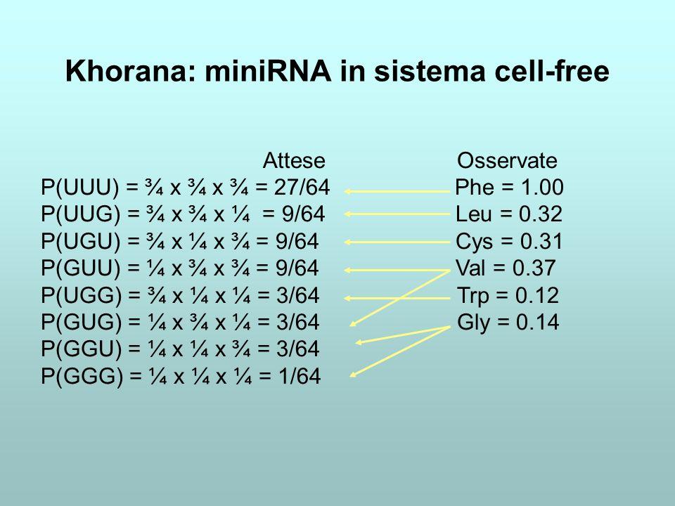 Khorana: miniRNA in sistema cell-free
