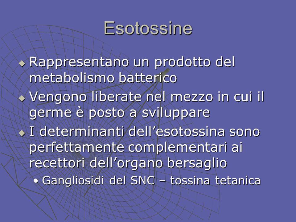 Esotossine Rappresentano un prodotto del metabolismo batterico