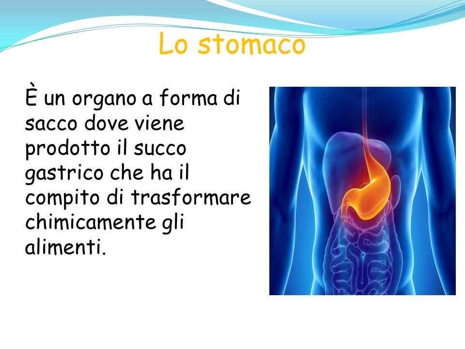 Lo stomaco È un organo a forma di sacco dove viene prodotto il succo gastrico che ha il compito di trasformare chimicamente gli alimenti.