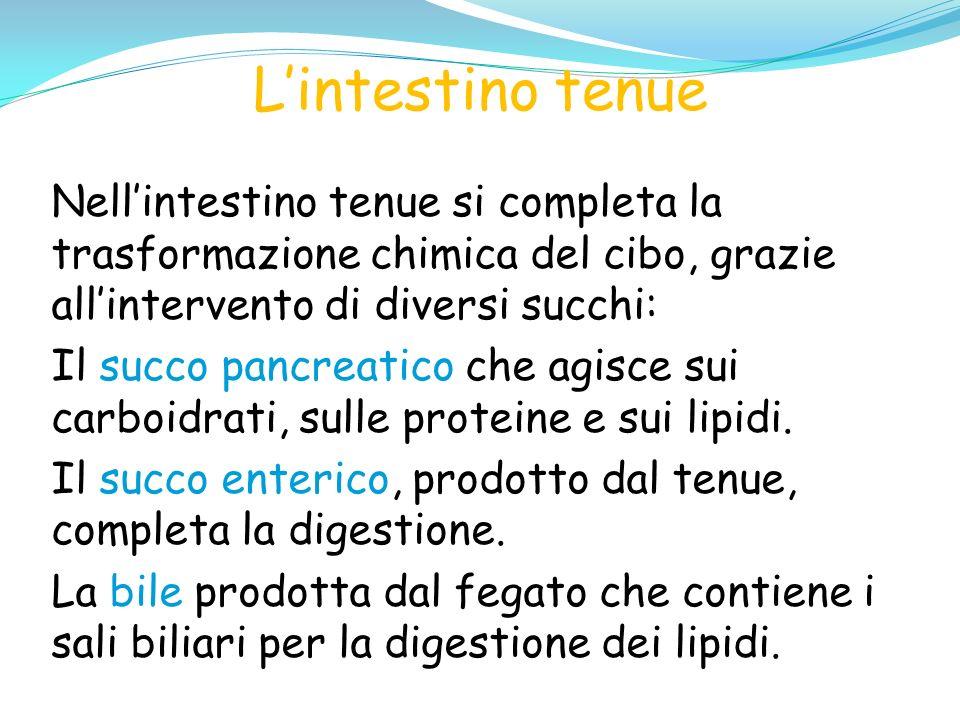 L'intestino tenue Nell'intestino tenue si completa la trasformazione chimica del cibo, grazie all'intervento di diversi succhi: