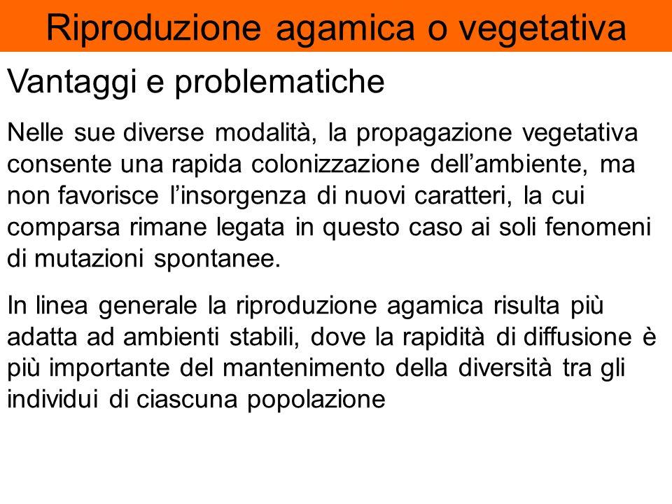 Riproduzione agamica o vegetativa