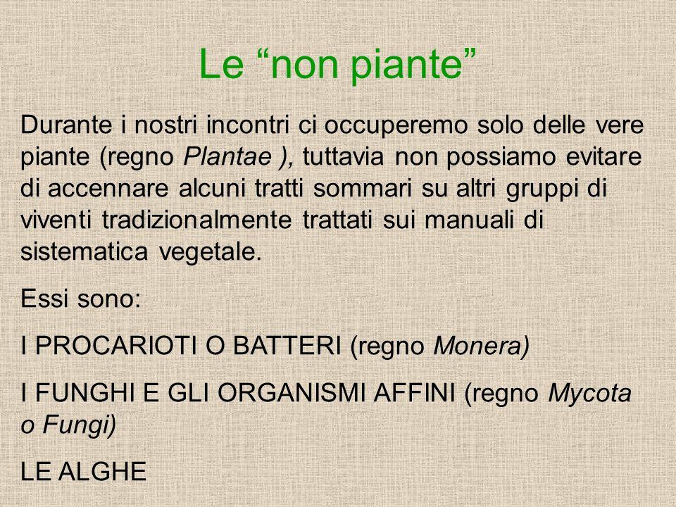 Le non piante