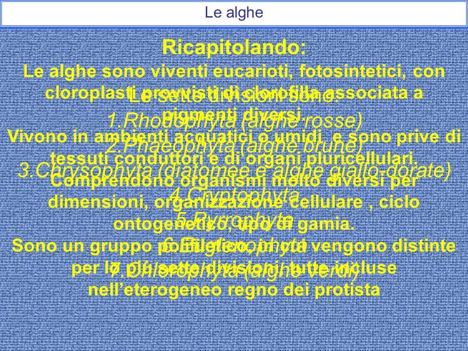 Le sette divisioni sono: Rhodophyta (alghe rosse)