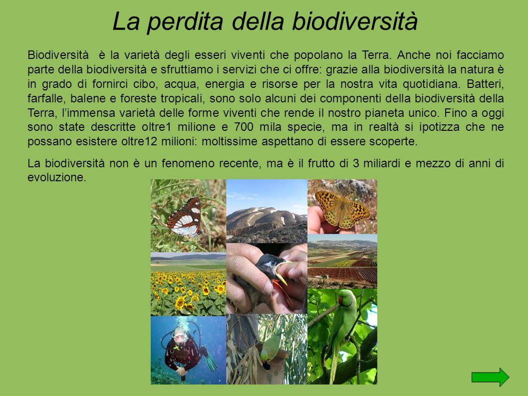 La perdita della biodiversità