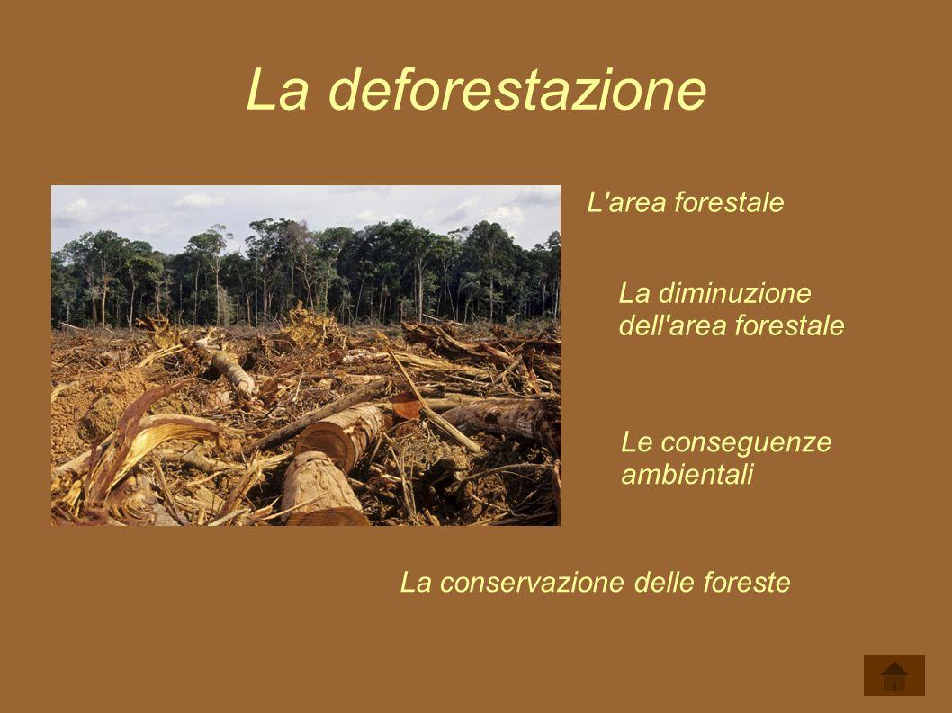 La deforestazione L area forestale La diminuzione dell area forestale