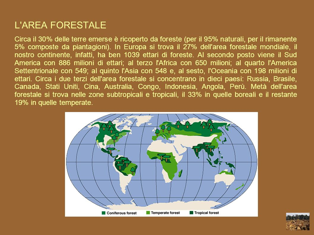 L AREA FORESTALE