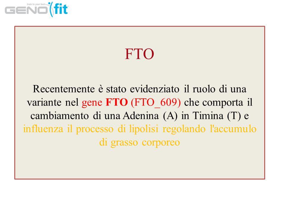 FTO Recentemente è stato evidenziato il ruolo di una variante nel gene FTO (FTO_609) che comporta il cambiamento di una Adenina (A) in Timina (T) e influenza il processo di lipolisi regolando l accumulo di grasso corporeo