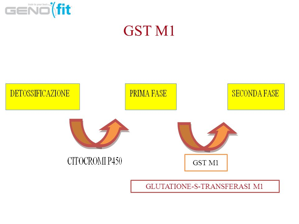 GLUTATIONE-S-TRANSFERASI M1