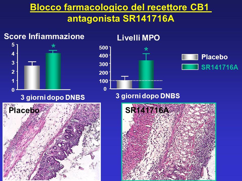 Blocco farmacologico del recettore CB1