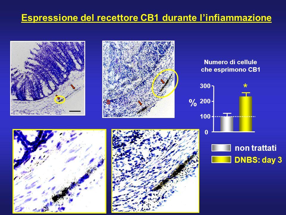Espressione del recettore CB1 durante l'infiammazione