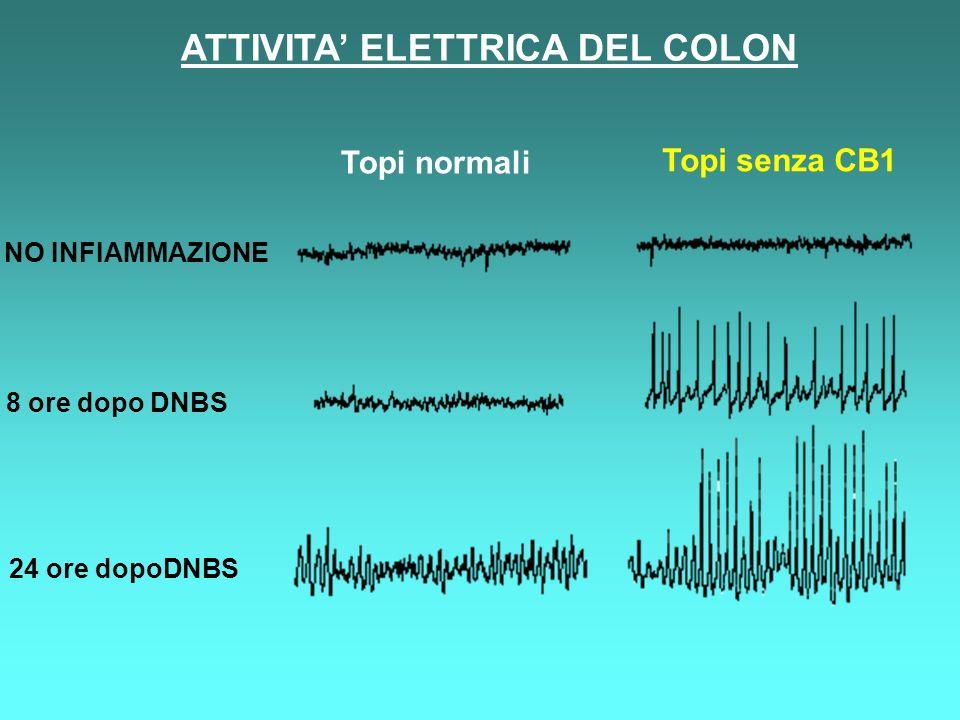 ATTIVITA' ELETTRICA DEL COLON